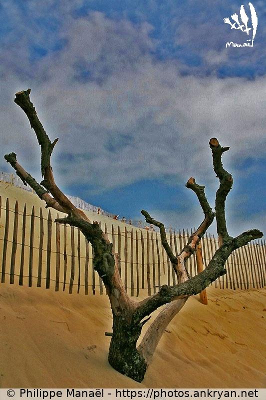 sable sableuse